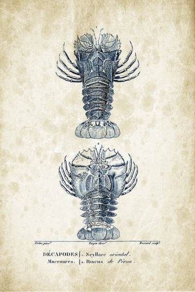 Wall Art - Digital Art - Crustaceans - 1825 - 29 by Aged Pixel