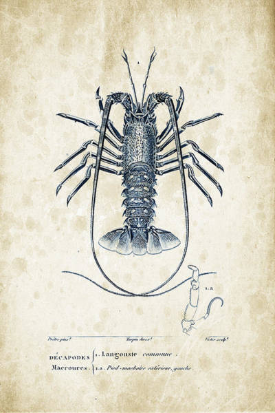 Wall Art - Digital Art - Crustaceans - 1825 - 30 by Aged Pixel