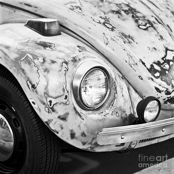Photograph - Crusty Bug 3 by Patrick M Lynch