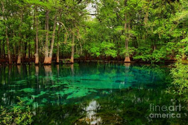 Photograph - Crystal Blue Manatee Spring Waters by Adam Jewell