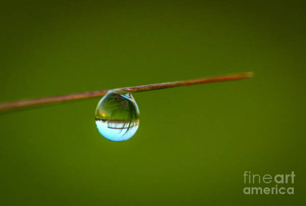 Photograph - Crystal Clear Dew Drop by Tom Claud