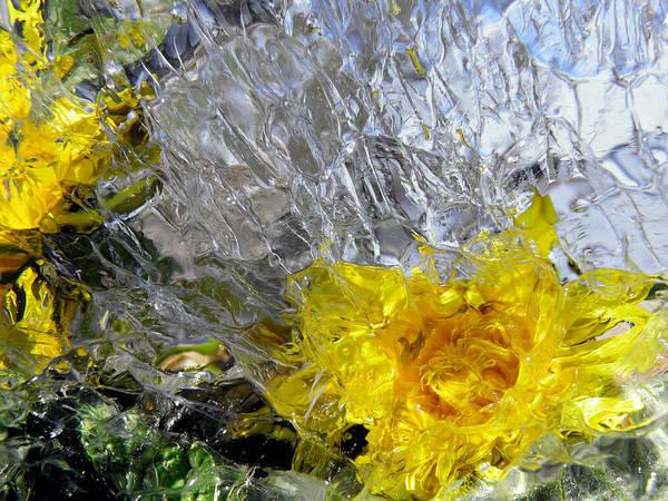 Photograph - Crystal Flowers by Sami Tiainen