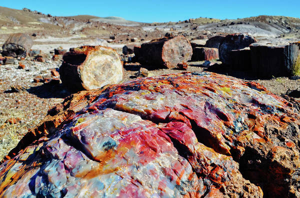 Photograph - Crystal Forest Petrified Forest by Kyle Hanson