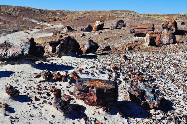 Photograph - Crystal Forest Petrified Forest National Park by Kyle Hanson