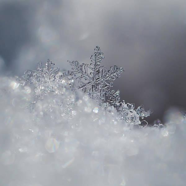 Snowflake Photograph - Crystal Snowflake by Beth Riser