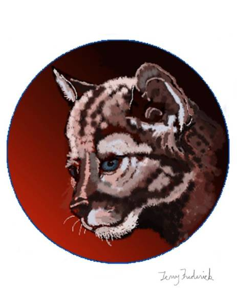 Drawing - Cub by Terry Frederick