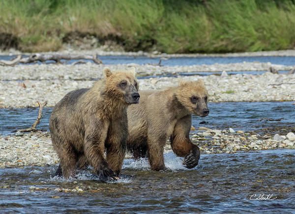 Photograph - Cubs On The Prowl by Cheryl Strahl