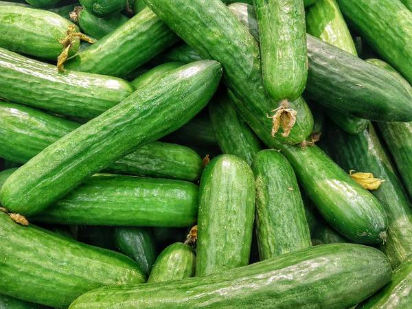 Wall Art - Photograph - Cucumbers by Happy Home Artistry