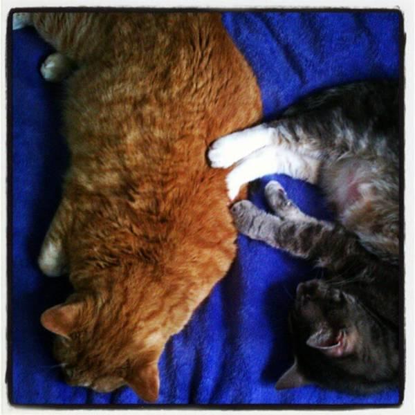 Photograph - Cuddling by Tammy Winand