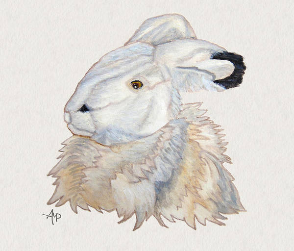 Painting - Cuddly Arctic Hare Watercolor by Angeles M Pomata