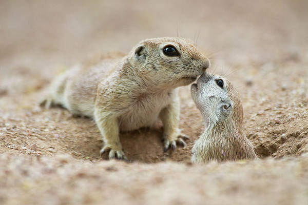 Wall Art - Photograph - Cuddly Squirrel Kisses by Ruth Jolly