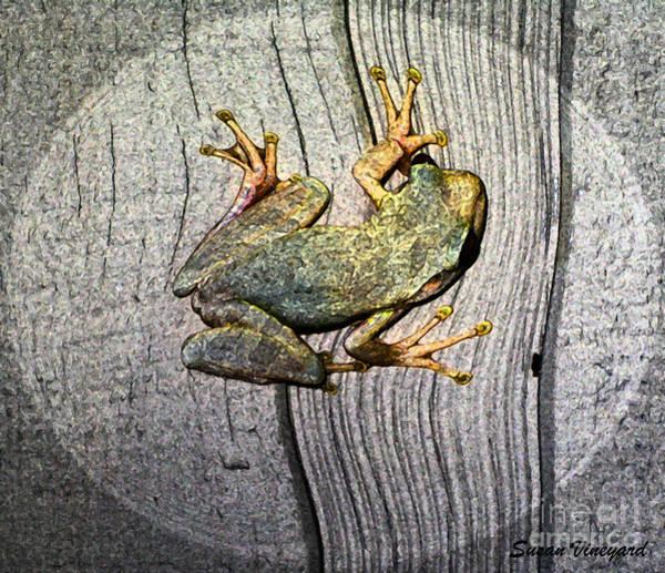 Photograph - Cudjoe Key Frog by Susan Vineyard