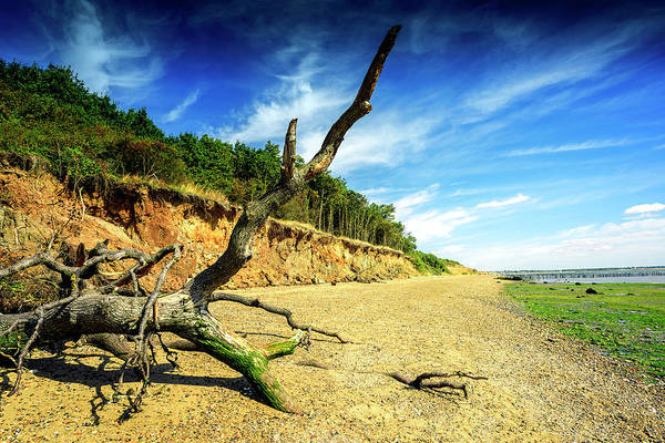 Photograph - Cudmore Grove Mersea Island by John Williams