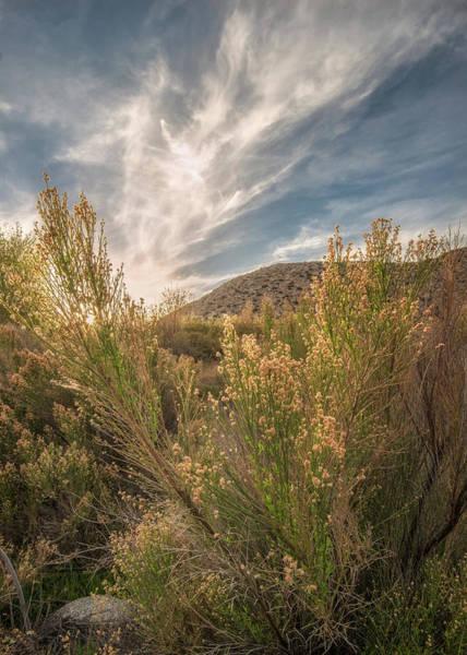 Wall Art - Photograph - Culp Valley Sunset by Joseph Smith