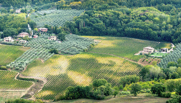 Scenery Wall Art - Photograph - Cultivated Vineyards Tuscany  Italy by Michalakis Ppalis