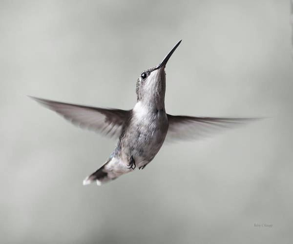 Beautiful Hummingbird Photograph - Cumberland Gap Hummingbird Precious And Proud by Betsy Knapp