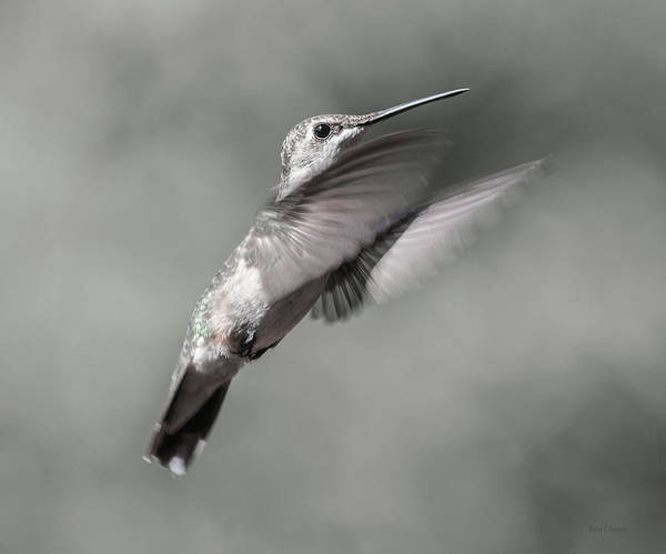 Beautiful Hummingbird Photograph - Cumberland Gap Hummingbird Small But Mighty by Betsy Knapp