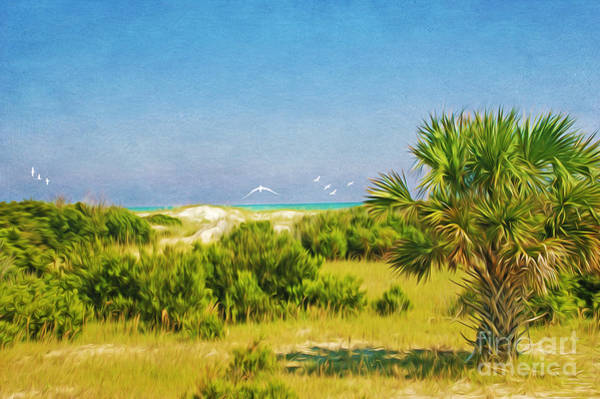 Cumberland Photograph - Cumberland Island Serenity by Laura D Young