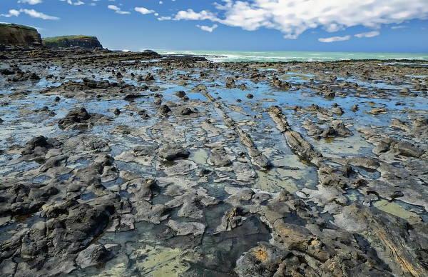 Photograph - Curio Bay Nature Scenic by Anthony Dezenzio