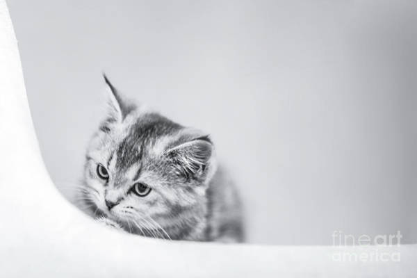 Mono Photograph - Curiosity by Evelina Kremsdorf