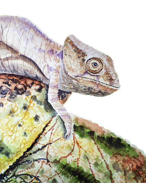 Curious Baby Chameleon Art Print