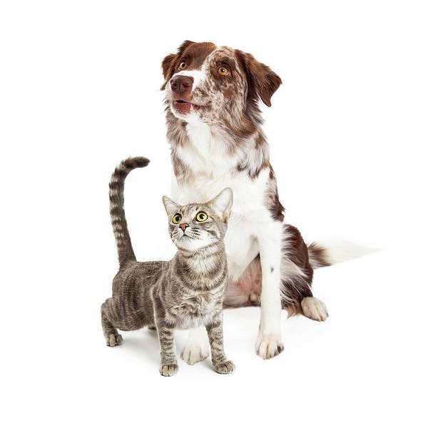 Wall Art - Photograph - Curious Cat And Dog Looking Up by Susan Schmitz