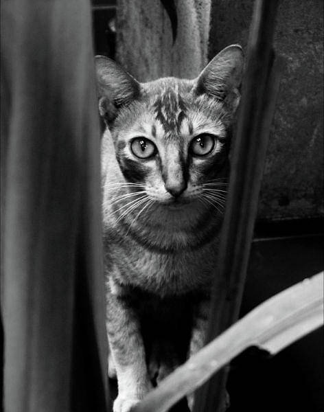 Photograph - Curious Cat by Duncan Davies