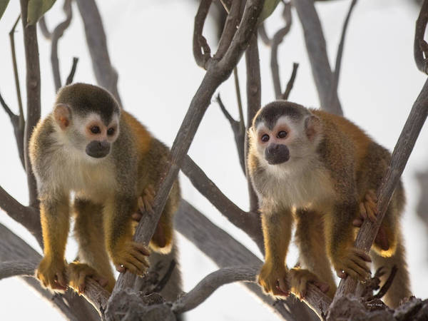 Critters Photograph - Curious Couple by Betsy Knapp