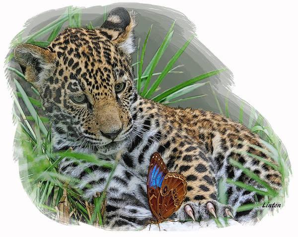 Digital Art - Curious Cub by Larry Linton