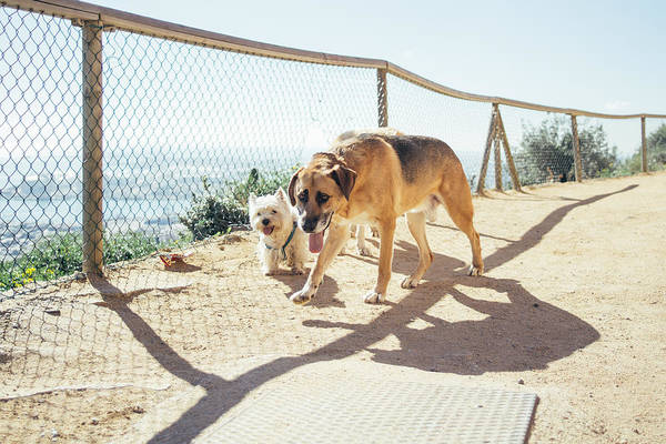Wall Art - Photograph - Curious Dogs by Pati Photography