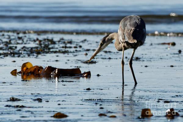 Photograph - Curious Heron by Sue Harper