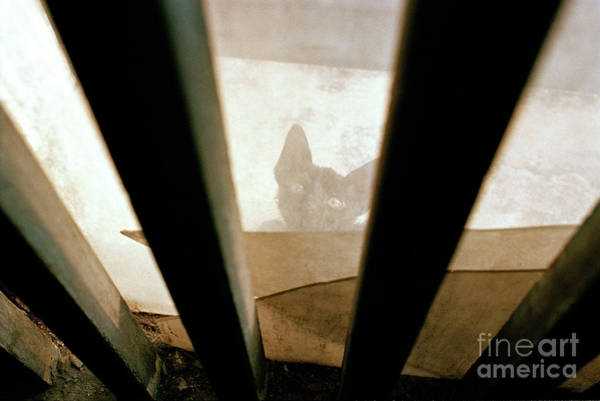 Wall Art - Photograph - Curious Kitten by Dean Harte