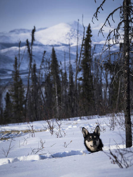 Photograph - Curious Pup With A View by Ian Johnson