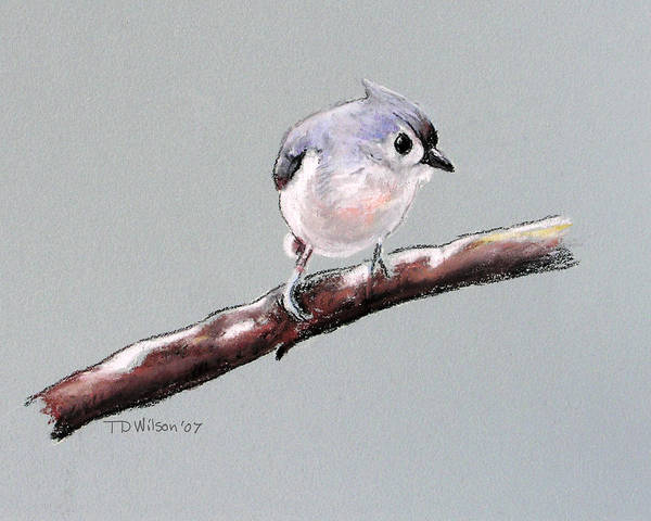 Pastel - Curious Tufted Titmouse by TD Wilson