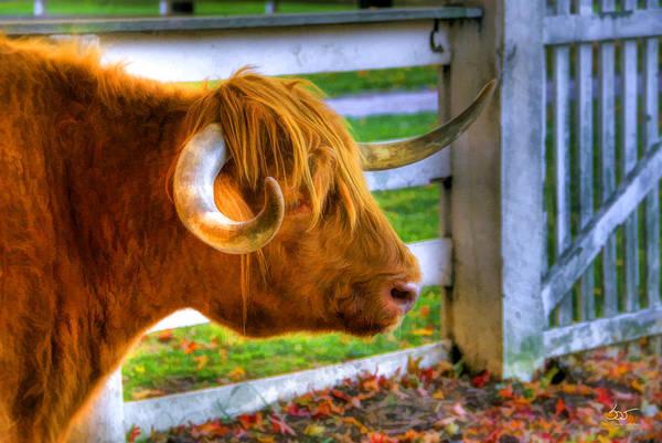 Photograph - Curly Horn Beastie by Sam Davis Johnson