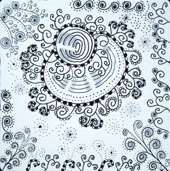 Drawing - Curly by Carole Brecht