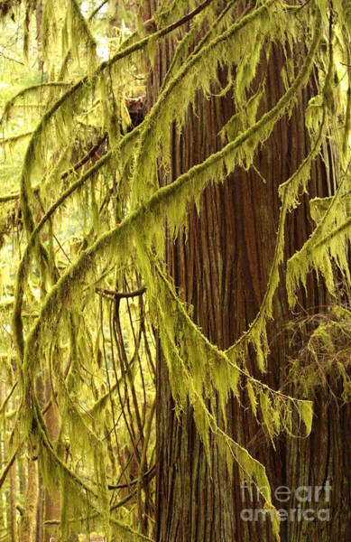 Photograph - Curves In The Rainforest by Carol Groenen