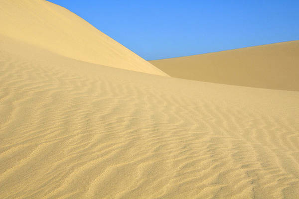 Photograph - Curving Dunes by Lara Ellis