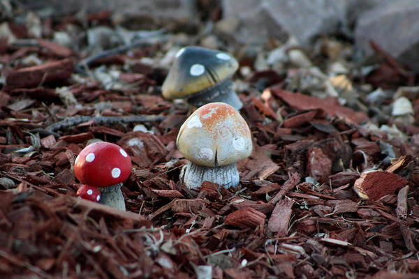 Photograph - Cluster Of Toadstools  In Fairy Garden by Colleen Cornelius