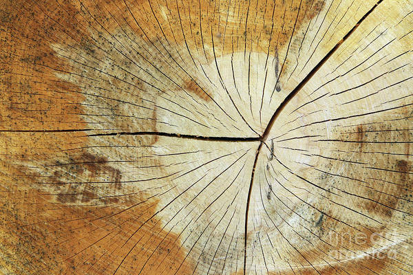 Wall Art - Photograph - Cut Tree Trunk - Texture Of Wood - Annular Rings by Michal Boubin