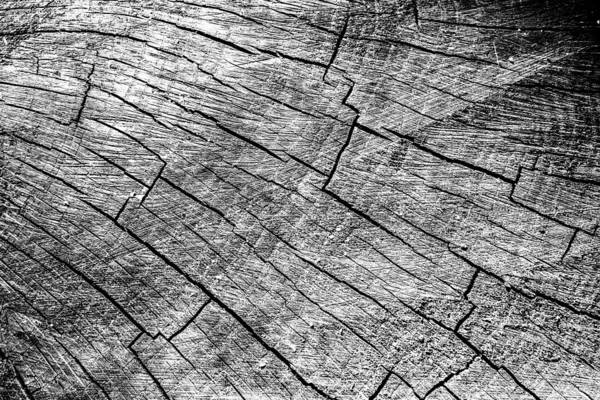 Photograph - Cut Wood Trunk And Grain Pattern by John Williams