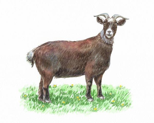 Wall Art - Painting - Cute And Curious Goat Watercolor by Irina Sztukowski