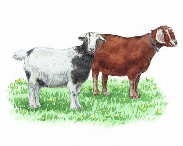 Wall Art - Painting - Cute And Curious Goats Watercolor by Irina Sztukowski