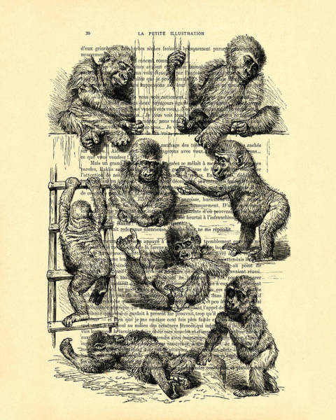 Wall Art - Digital Art - Baby Monkeys Playing Black And White Antique Illustration by Madame Memento