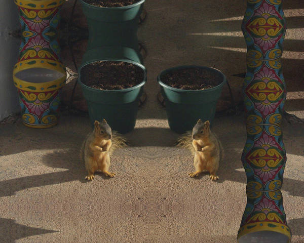 Cute Baby Squirrels On The Porch Art Print