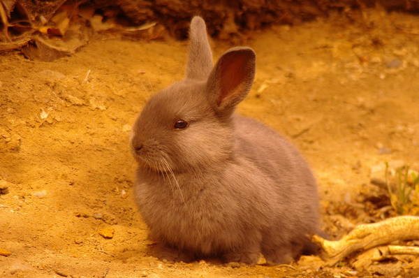 Little Things Photograph - Cute Bunny by Jeff Swan