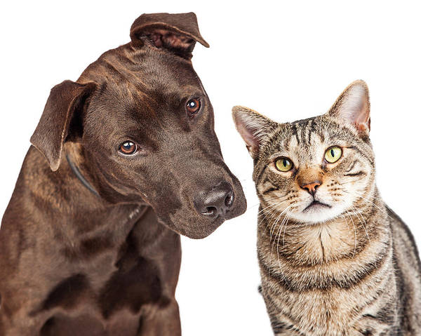 Crossbreed Wall Art - Photograph - Cute Cat And Dog Closeup Photo by Susan Schmitz