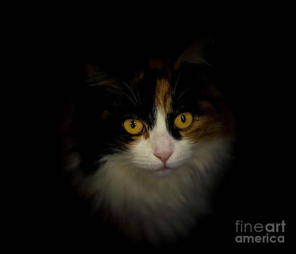 Photograph - Cute Cat by Mats Silvan