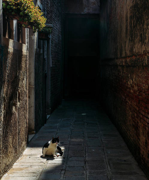 Photograph - Cute Cat On Alleyway by Alexandre Rotenberg