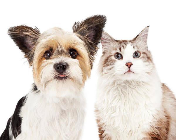 Canine Photograph - Cute Dog And Cat Closeup by Susan Schmitz